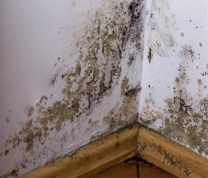 Mold growth in the corner of a building